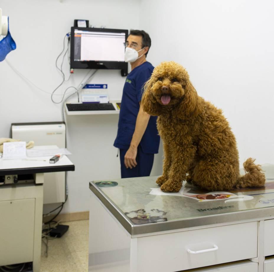 Consulta de gossos
